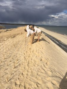 SPB-Dune Grass